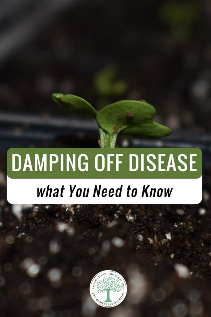 damping off disease pin