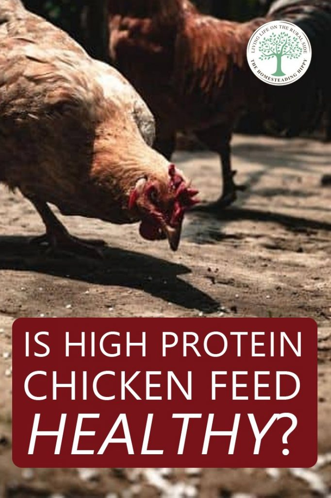 high protein chicken feed pin
