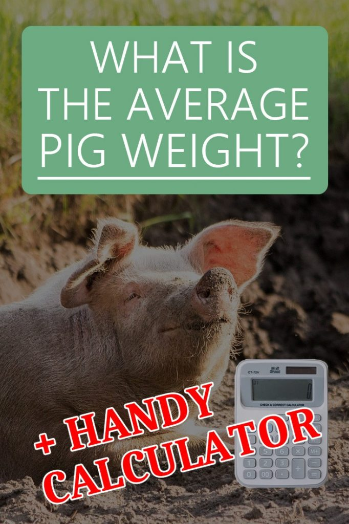 pig weight calculator pin