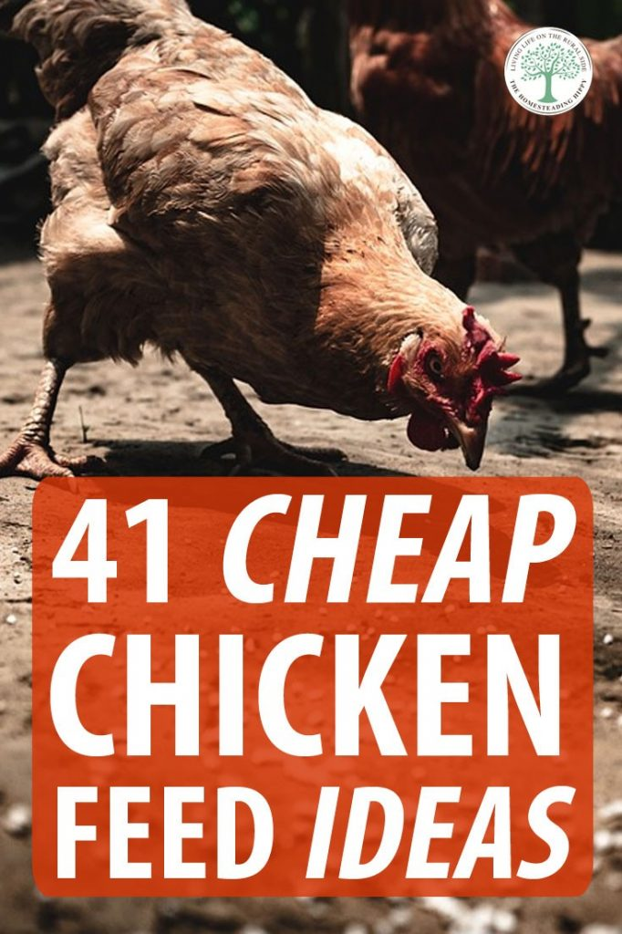 chicken feed ideas pin