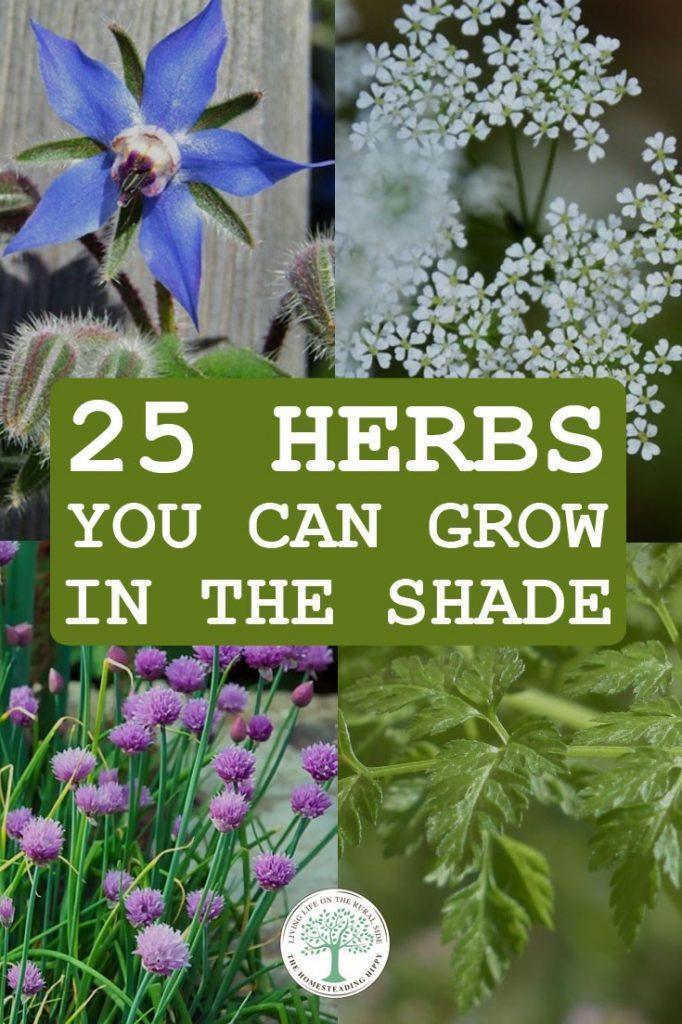 shade herbs pin