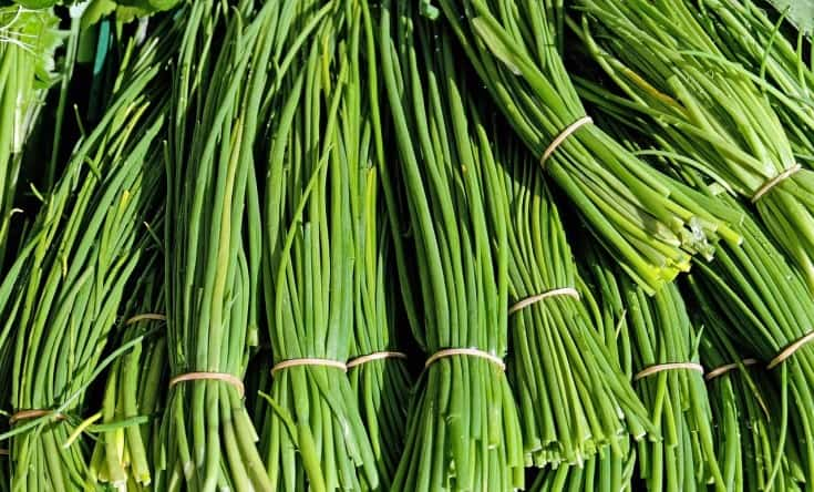 harvested chives plants