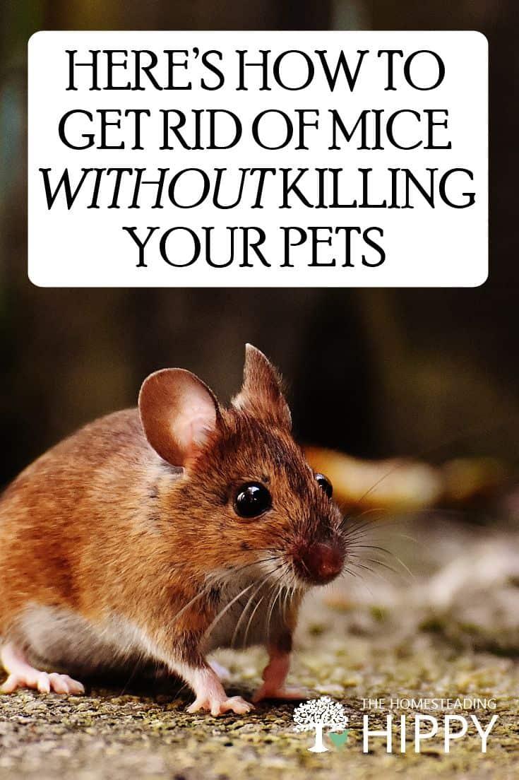 getting rid of mice pin image
