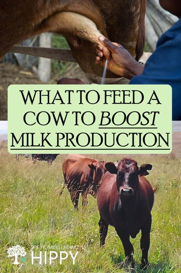 boosting milk production pin