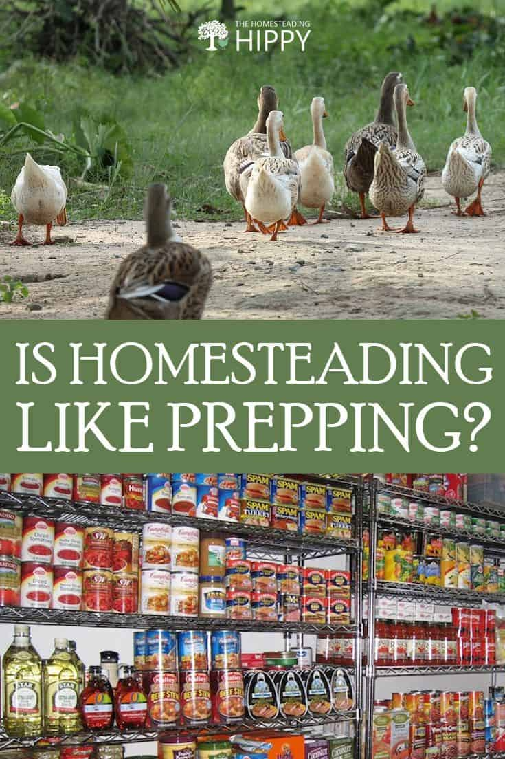 homesteading like prepping pin 2