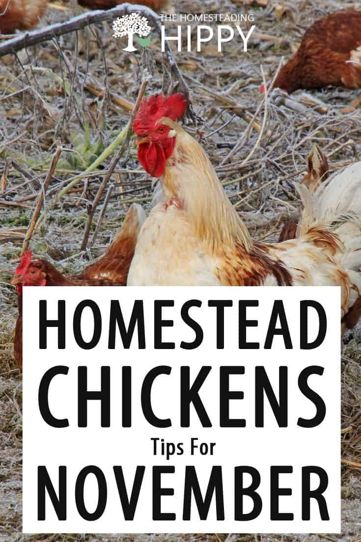 November chicken tips pin image