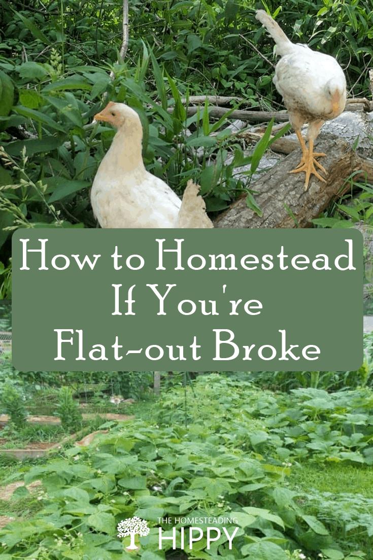 homesteading when broke pin