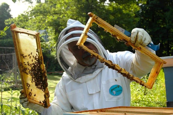 beekeeper working in a hive