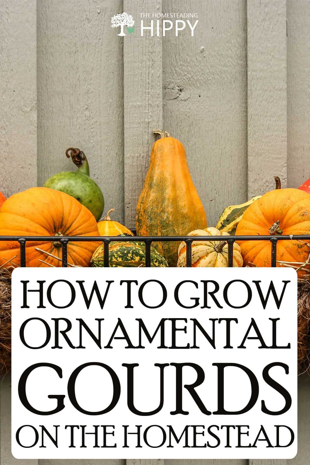 ornamental gourds pin