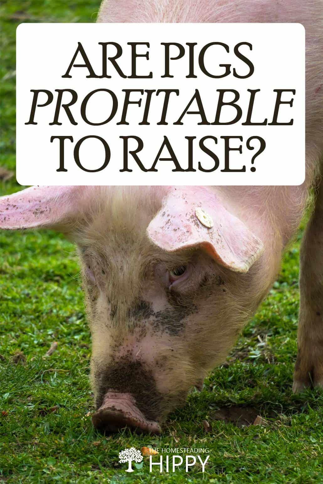 hogs profitability pin