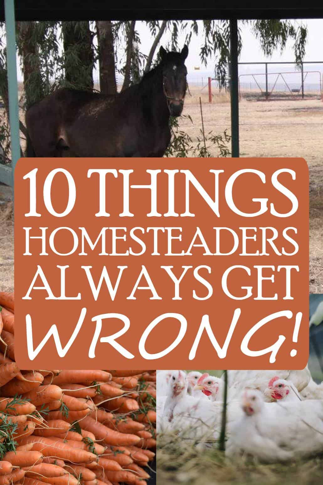 homesteading mistakes pin