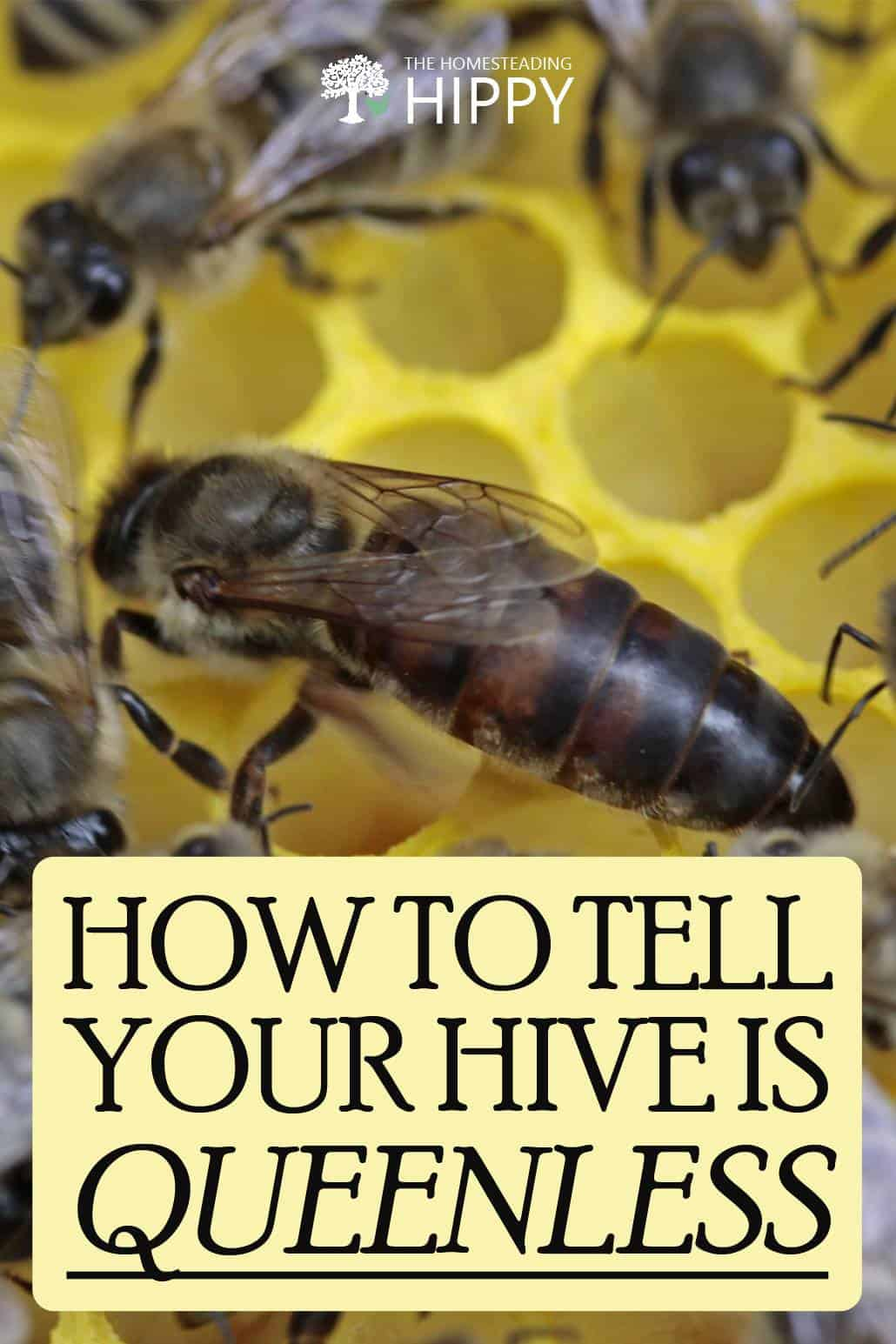 queenless hive pinterest