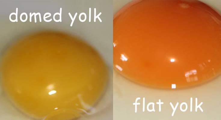 domed vs flat yolk