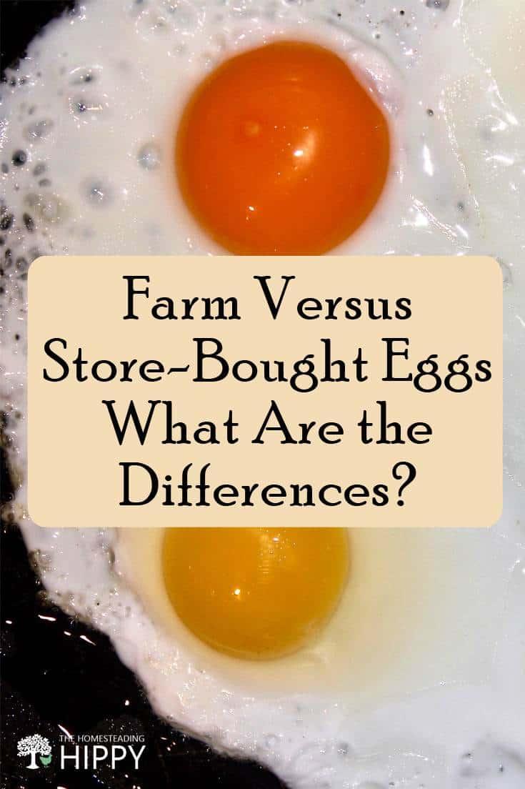 farm vs. supermarket eggs pin