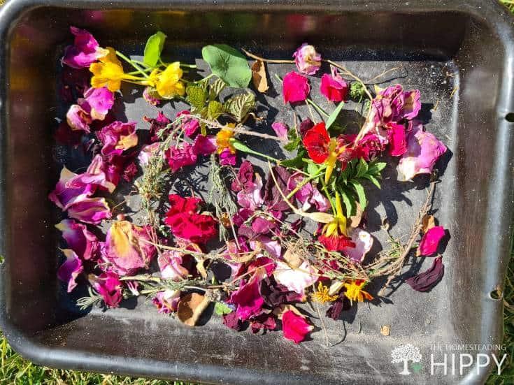 flower petals inside plastic tray