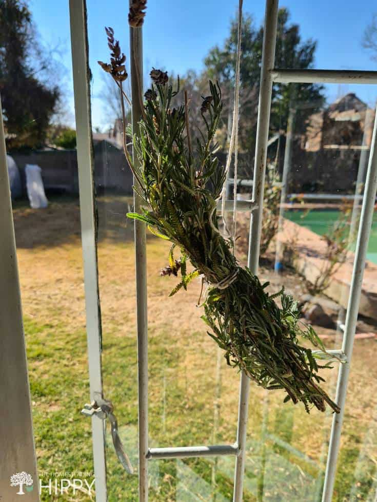 lavender hung up to dry
