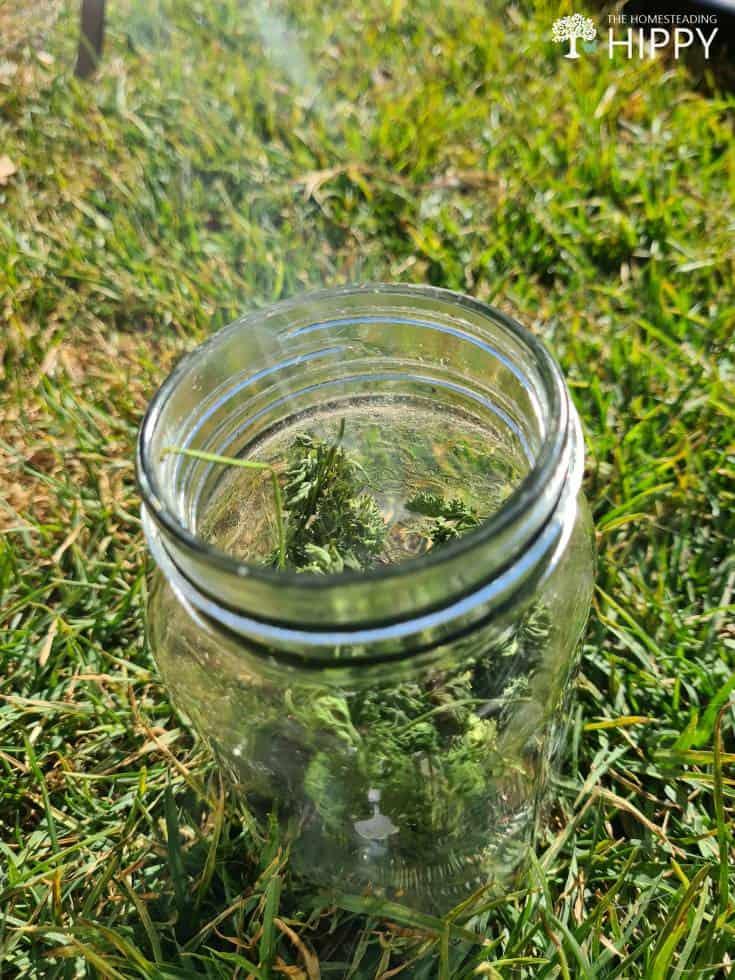 parsley burning in mason jar