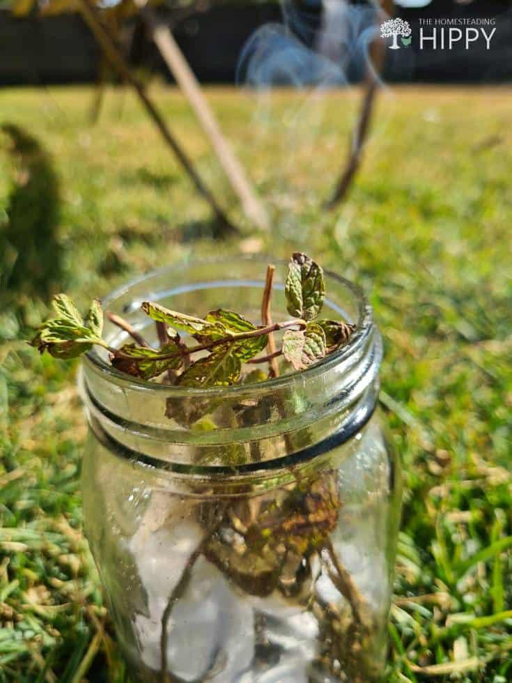 peppermint burning in mason jar