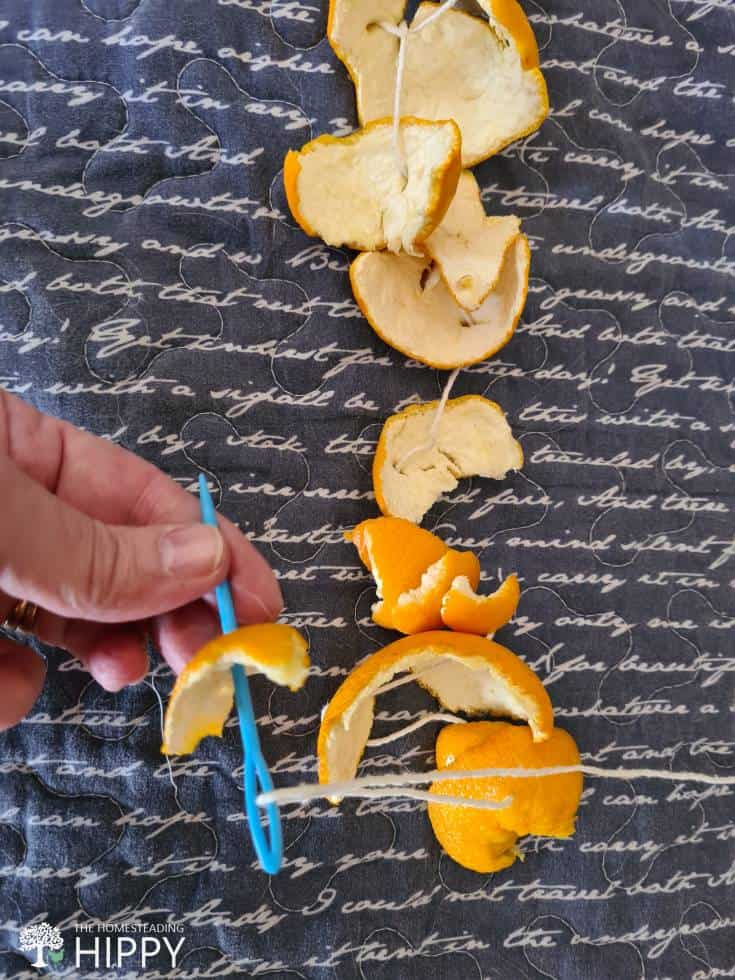 sewing orange peels onto twine