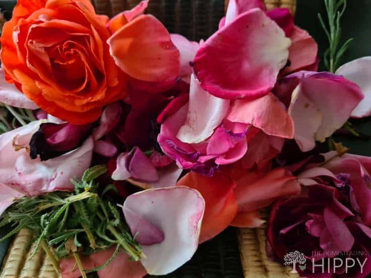 leaves flower and petals for potpourri