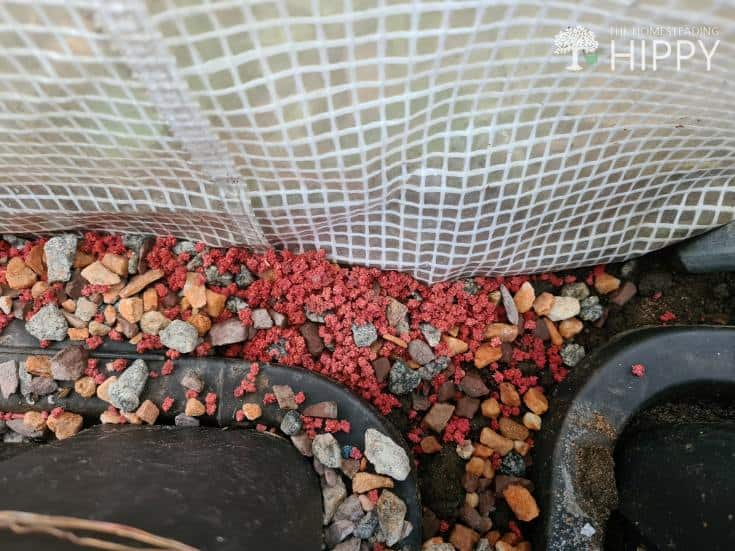 Slug-Em pellets behind boxes in greenhouse