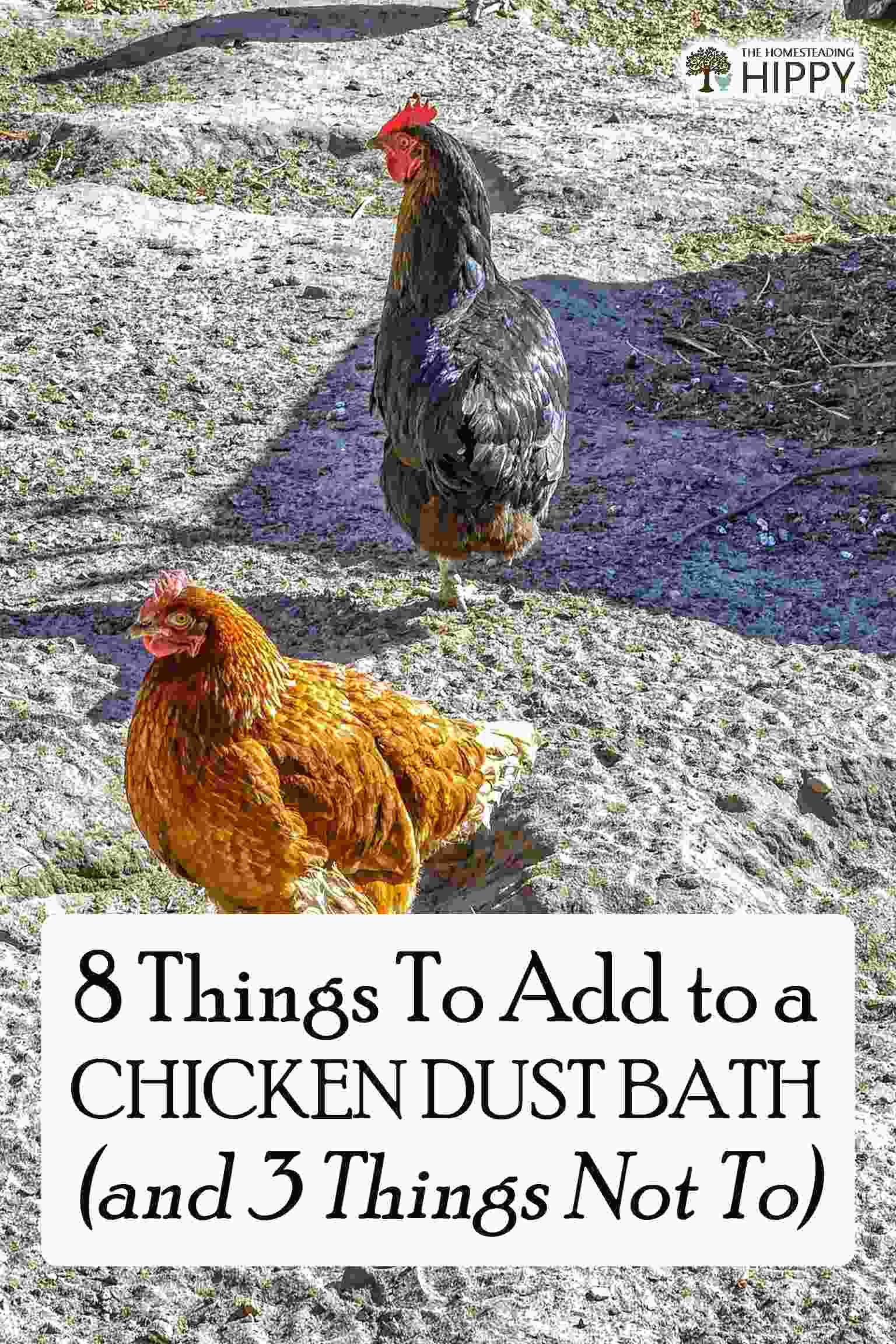 chickens dust bath pin