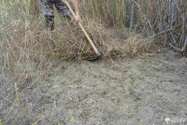 clearing dead weeds and vegetation from fallowed garden area