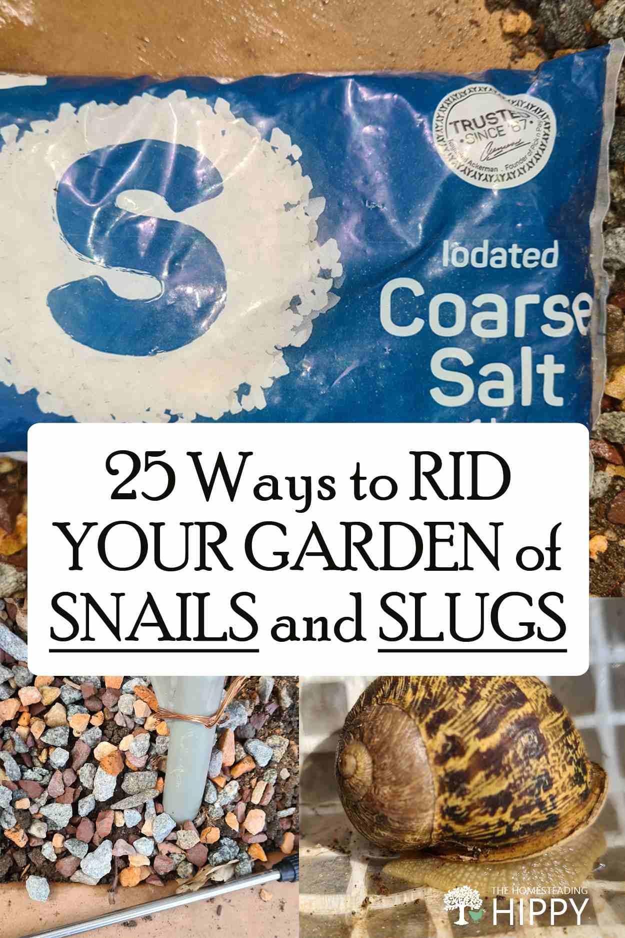 getting rid of snails slugs pin