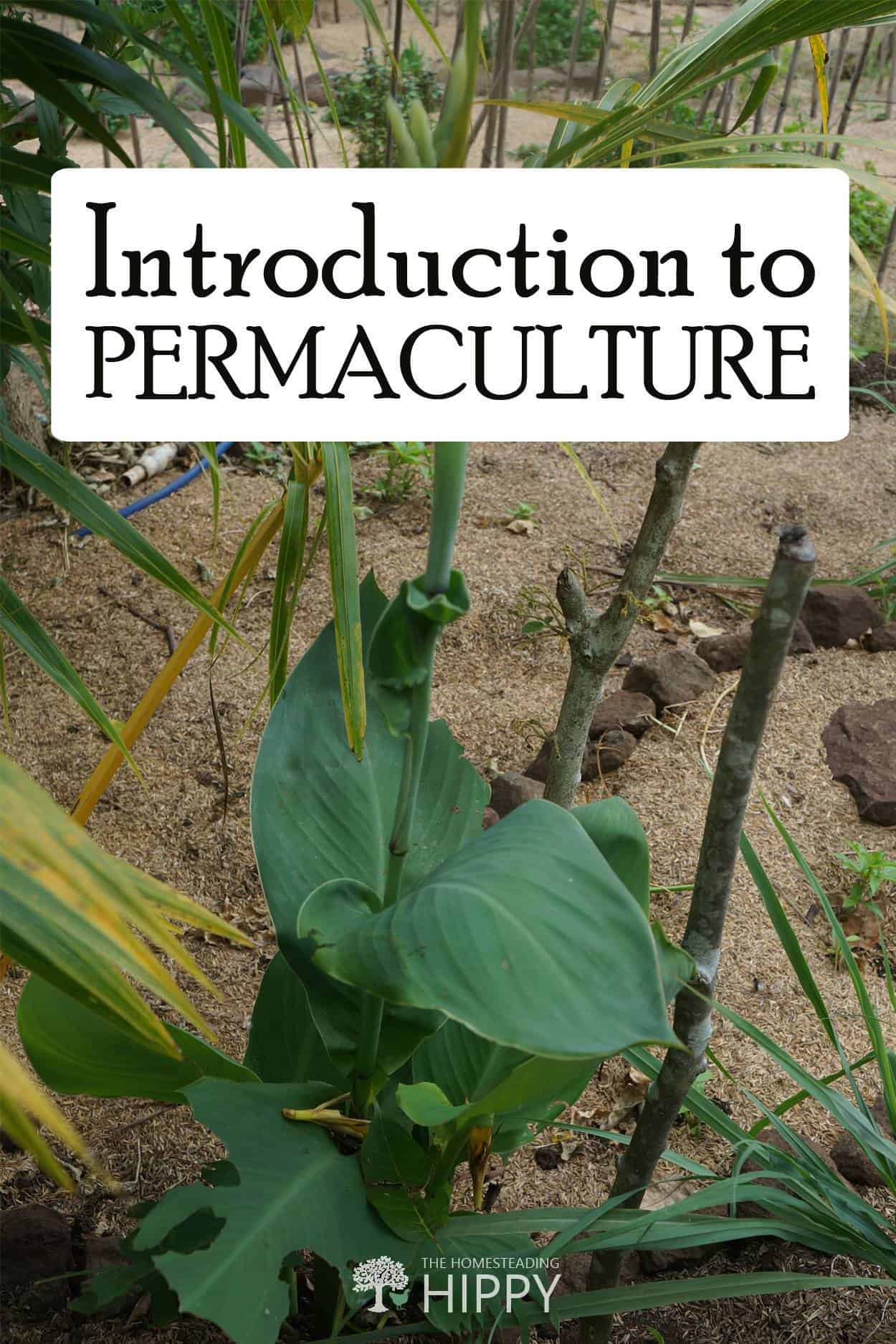 permaculture 101 pin