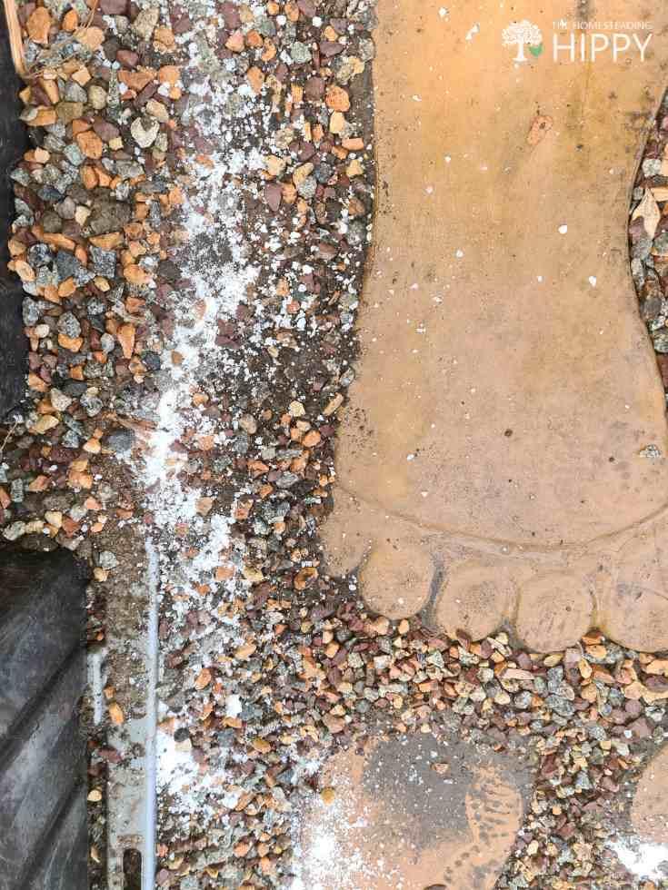 salt spread around the greenhouse floor